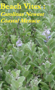 beach vitex image