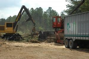 Processing Timber at Logging Deck