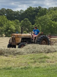 Cara Smith raking hay