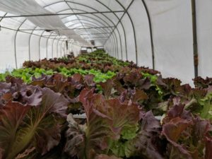 Cover photo for Now Accepting Proposals for NC AgVentures Grants